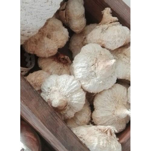 Hvide mini græskar pr. pose med 10 stk.
